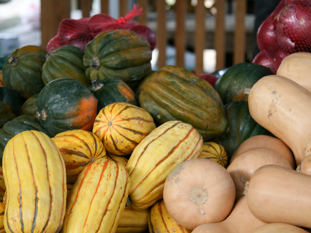 Varieties of winter squash