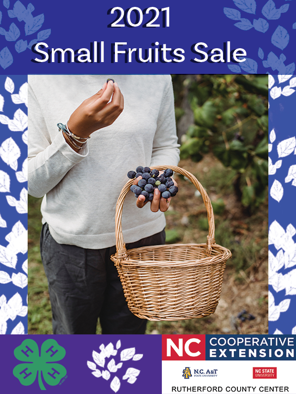 Flyer for fruitsale which has a person holding a basket and holding blueberries